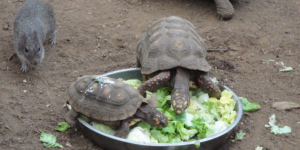 Tortoise Pets – Reasons Why We Love Them!