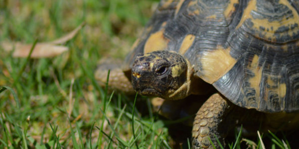 5 Important Things to Consider in Tortoise Pet Care