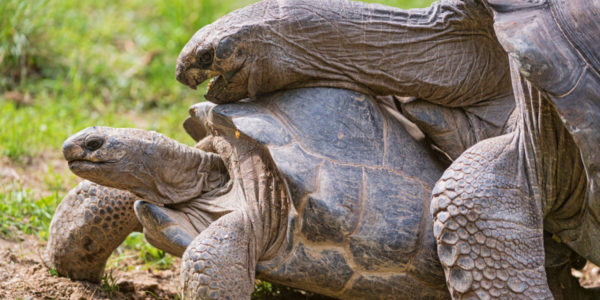 How to Properly Take Care of a Big Tortoise
